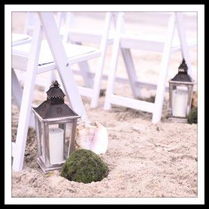 lanternshellmoss
