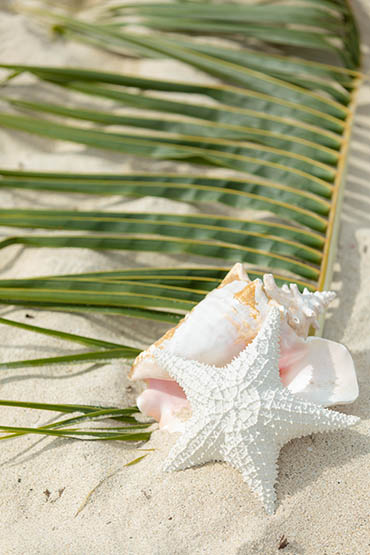 St Thomas Destination Wedding Planner